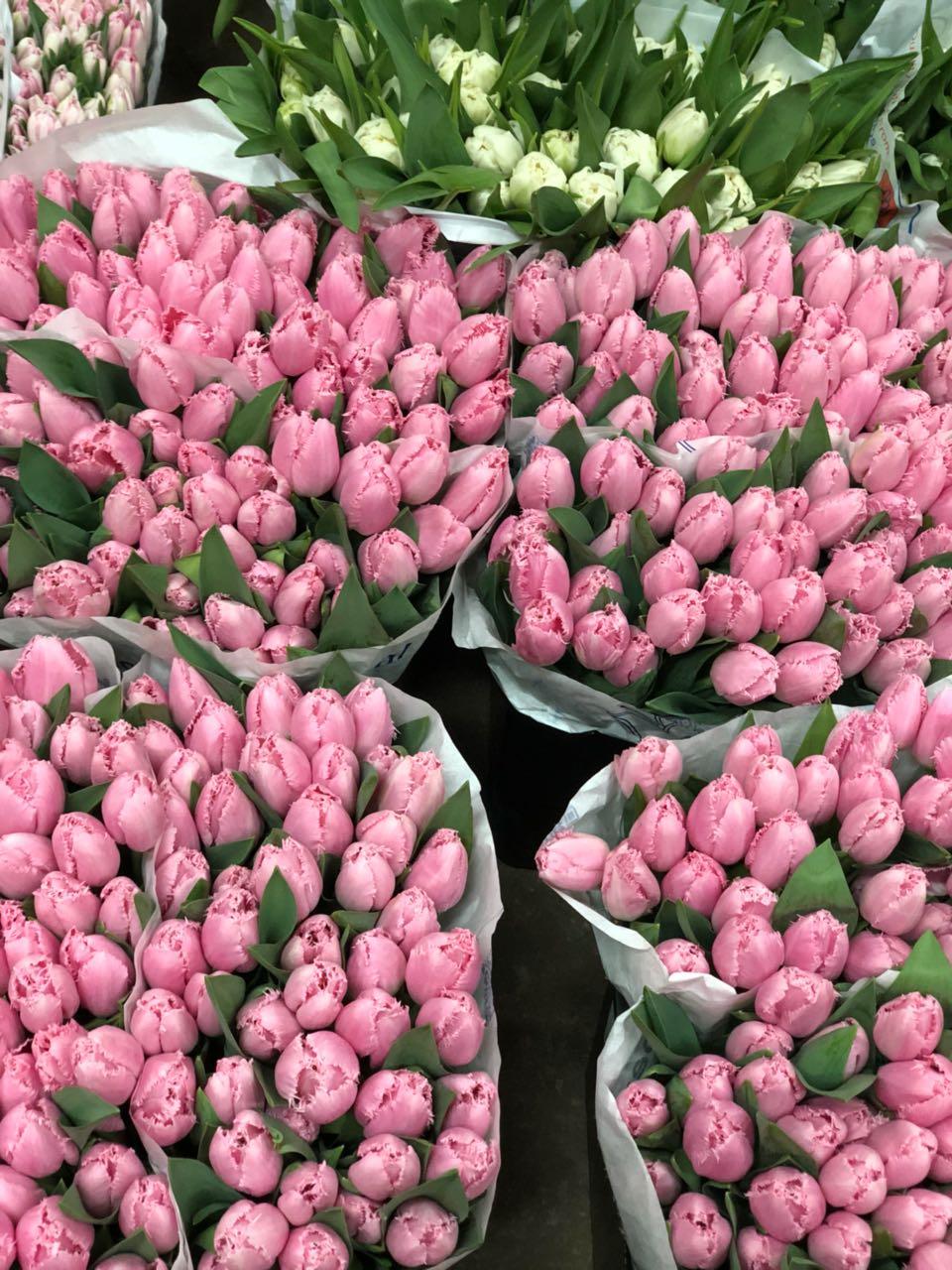 Цветов, стоимость цветы тюльпаны оптом москва